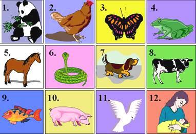 判断以下动物哪些是卵生,哪些是胎生?
