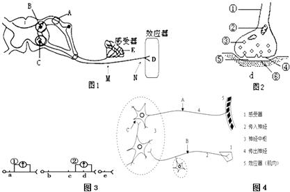 图1为此人反射弧结构示意图,a,e,m,n为反射弧上位点,d为神经与肌细胞