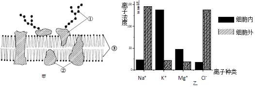 如图表示细胞膜的亚显微结构.请据图回答问题