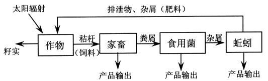 蚯蚓的结构图简图