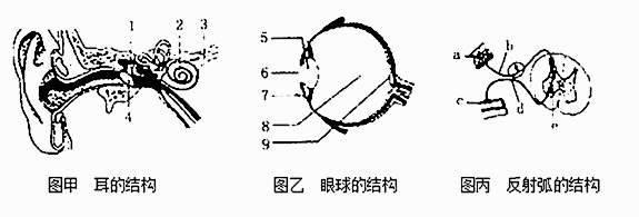 据甲,乙,丙三图所示结构示意图,回答