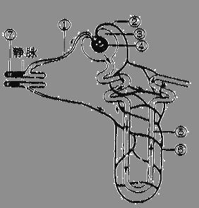 下图为肾单位的结构示意图,请据图回答问题.