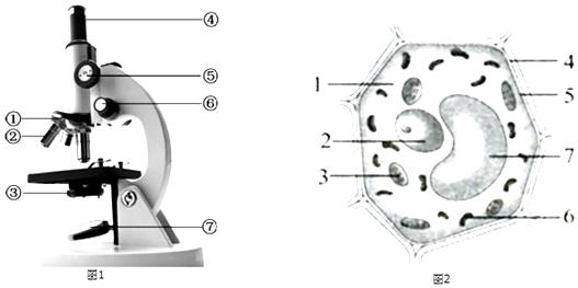 如图是显微镜的结构示意图和植物细胞结构模式图,看图回答下列问题