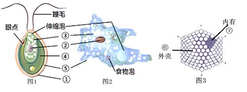 下面为衣藻,变形虫及腺病毒的结构示意图,请据图回答