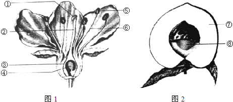图1是桃花的结构模式图,图2是桃的果实示意图.请分析回答