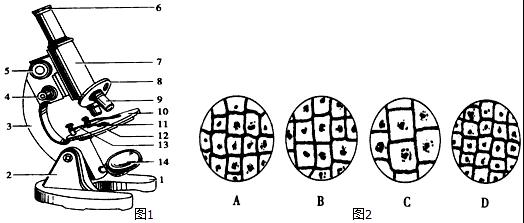 如图1是显微镜的结构示意图,请据图回答