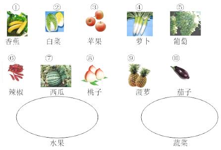 请将水果和蔬菜分类,分别把它们的序号填在相应的圈中.