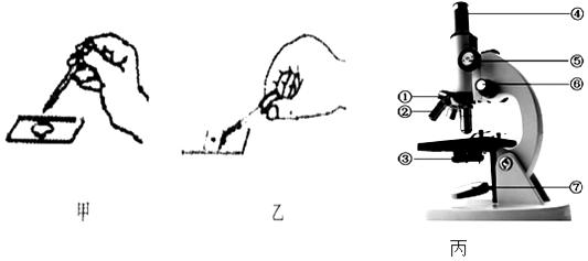"""图甲和图乙是""""观察人口腔上皮细胞""""实验的部分操作,丙图是显微镜的"""