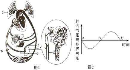 心脏结构图平面图