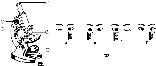 如图1是显微镜的简图初中,请据图回答.uzi结构图片