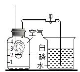 磷元素化学用语_铁在人类的生产、生活中有着重要的作用.