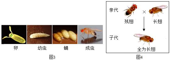 图片_x0020_100017
