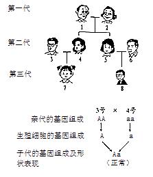 某家族有两种遗传病_如图表示人的生殖和发育过程,已知有酒窝和无酒窝是一对相对 ...
