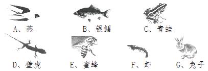 家鸽的形态结构_有关下列各图的说法正确的是(